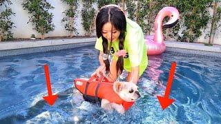 TEACHING MY DOGS HOW TO SWIM!