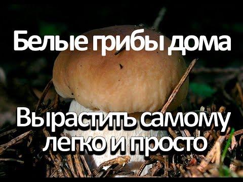 Выращивание вешенок в домашних условиях - грибное царство!