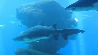 Mallorca Zoo Hai - Shark feeding