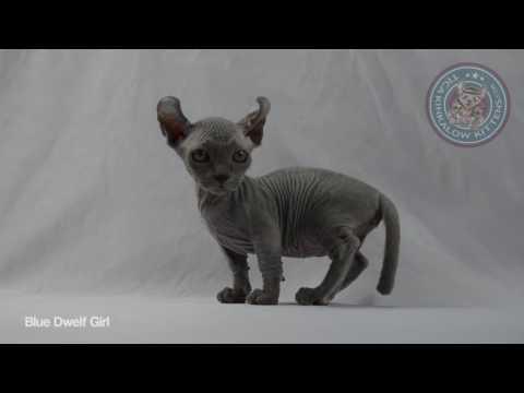 blue dwelf girl   video 720p