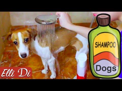 Как мыть собаку или как помыть щенка? | Уход за собакой | Elli Di Собаки