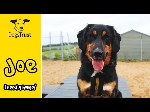 Dogs Trust Leeds Cato And Clouseau Youtube