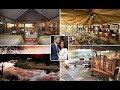 Harry and Meghan honeymoon: Inside luxury Botswana safari camp