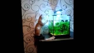 приколы с котами: кот и аквариум survivor eye of the tiger