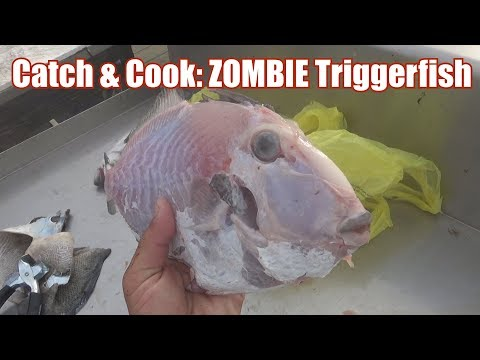 Catch & Cook 28: The ZOMBIE TRIGGERFISH