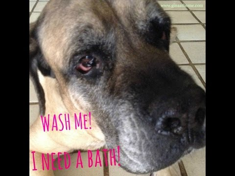 Homemade Dog Shampoo – All Natural With Apple Cider Vinegar