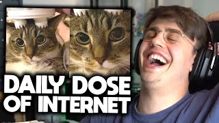 Papaplatte reagiert auf DAILY DOSE OF INTERNET! 😂🔥 | Papaplatte Highlights