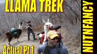 """Llama Trek Actual Part 1"" by Nutnfancy"