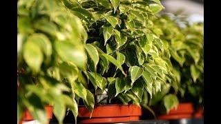 Почему в доме не живут цветы: Топ-6 ошибок неопытных любителей растений
