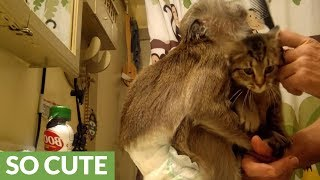 Jealous monkey & kitten scramble for owner's affection