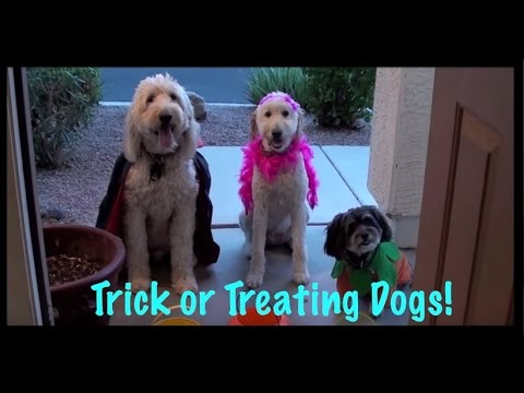 Dogs Go Treat or Treating – A Doggy Halloween