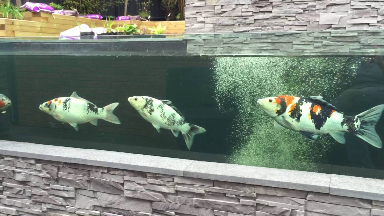 Koi pond with viewing window youtube for Koi pond window