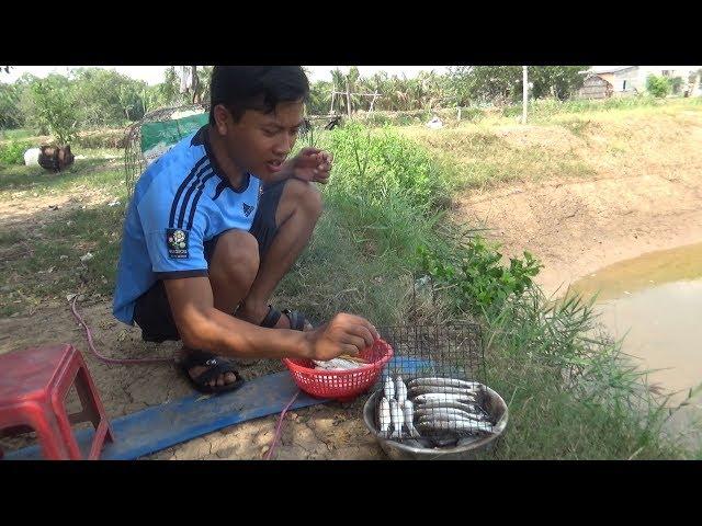 [Hậu Trường] Bắt cá Ngát trên sông Hàm Luông về nấu lẩu   Người Miền Tây