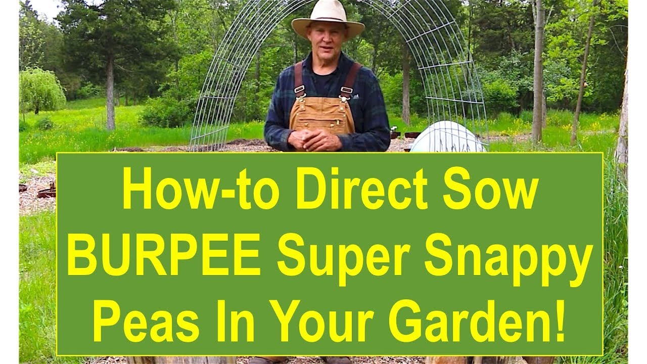 Basic Gardening Tips Tips and Ideas for Growing Your BURPEE Super
