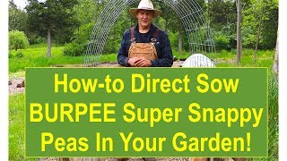Basic Gardening Tips: Tips and Ideas for Growing Your BURPEE Super Snappy Peas