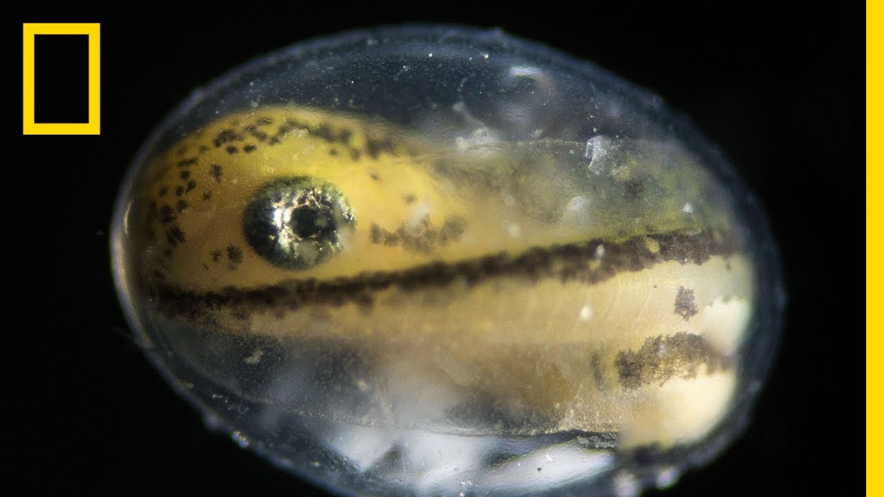 See a Salamander Grow From a Single Cell in this Incredible Time-lapse | Short Film Showcase