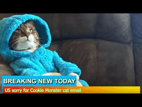 Jonny Hartwell - US EMBASSY: Accidentally Sends Meeting Email Of Photo of Cat in Pajamas