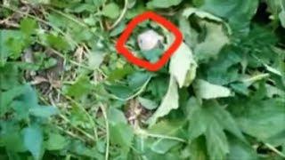 Лесник обнаружил Голову НЛО. непознанное и необъяснимое. ужасная находка в лесу