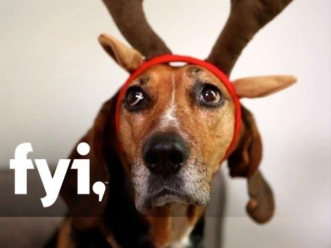 Tiny House Nation: An Upside-Down Christmas Tree | FYI - YouTube