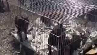 スタッフォードシャーブルテリア子犬の情報は→http://passerellewan.jp/...