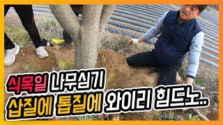 식목일 묘목식재 소나무 복분자 정자나무 심기
