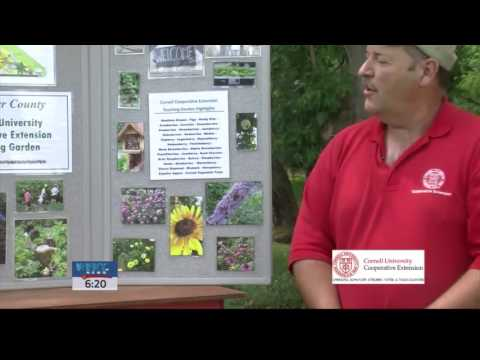 Cornell Cooperative Extension Connection   Community Gardens