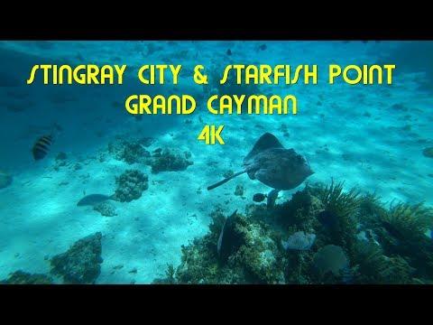 Stingray City & Starfish Point , Grand Cayman 4K