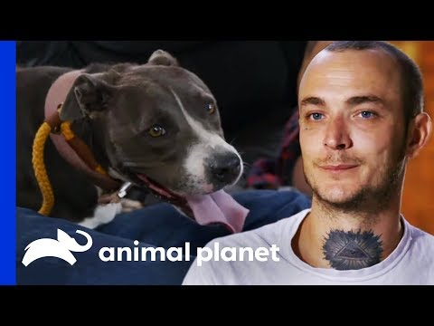Marcel Bonds With Stray Pit Bull During A Tricky Rescue | Pit Bulls & Parolees