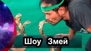 Змеиное шоу | Ферма змей в Нячанге | Шоу со змеями во Вьетнаме | Шоу змей