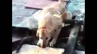 Top 10 funny animals 2019