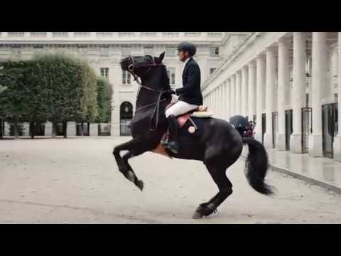 Don't Let Me Down Equine Edit