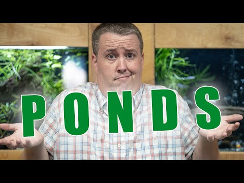 How To Breed Tropical Fish In Outdoor Mini Ponds [Presentation]