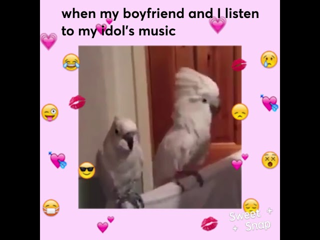 Sweet Snap: Parrots' funny reaction to the song