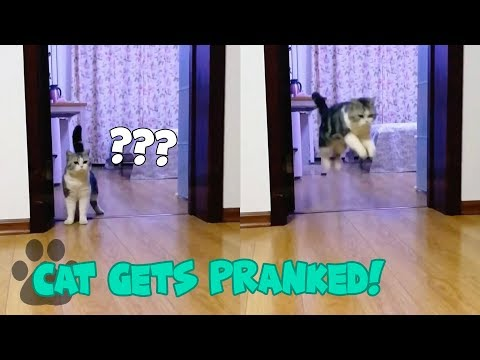 Man Pranks Cat with Invisible Tape - Cat Gets Pranked!