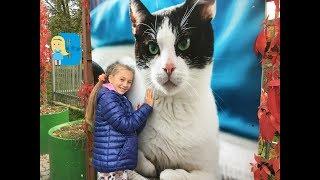 VLOG Влада покупает игрушки и корм, едем в приют для животных  Выбираем кошку