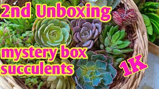 2nd unboxing mystery box succulents from Benguet