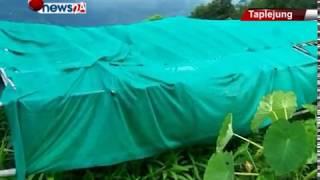 ताप्लेजुङमा अलैँचीको विरुवा विक्रि नहुँदा किसानहरु चिन्तामा – NEWS24 TV