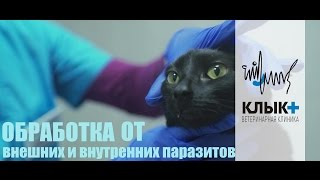 Как обработать кошку/собаку от блох и клещей