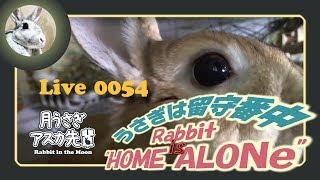 【 Live! 】ウサギは留守番中 0054 2019年3月18日 thumbnail