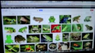 Frog VLE SM SULTAN ABDUL HALIM Viral Video