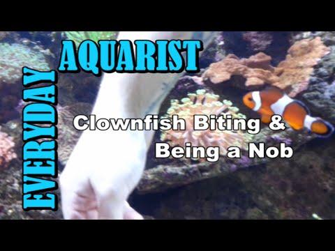 Clownfish Hates My Lizard Tattoo