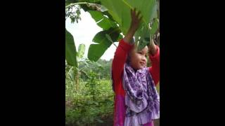 Aylila 13 Agt 2016 - main di kebun pisang