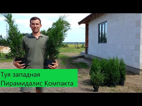 Вопрос: Что такое модульное озеленение участка?