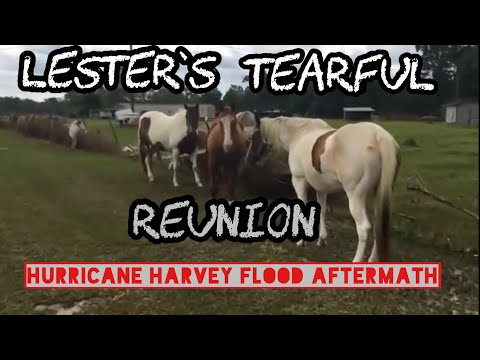 Tearful Reunion with pets after Hurricane Harvey