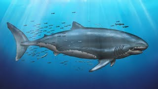 What Did Megalodon Really Look Like?