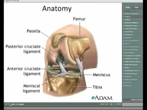 Posterior Cruciate Ligament Injuries of the Knee - YouTube
