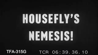Housefly's Nemesis (1950s)