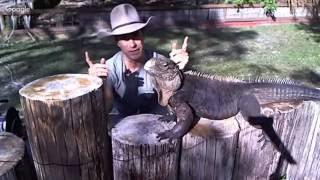 Rock Iguanas Live on Kamp Kenan!