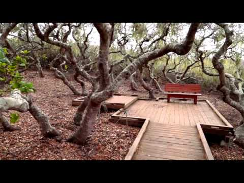 On the Road with Jo: Elfin Forest - Los Osos Baywood Park