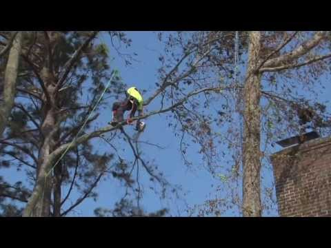 Advanced Tree Demo Tree Removal, Trimming and Rigging on the OBX Southern Shores NC